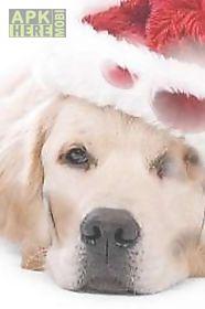sad christmas dog  live wallpaper