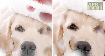 Sad christmas dog  Live Wallpape..