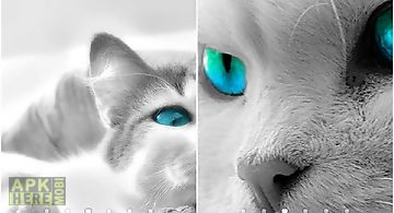 White cats Live Wallpaper