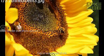Digital photo frame web