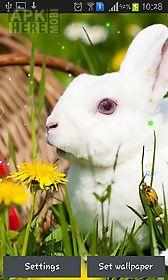 easter bunnies 2015 live wallpaper