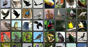 Bird sounds nature sounds app