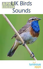 uk birds sounds free