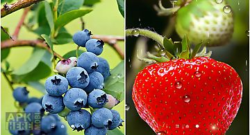 Berries food Live Wallpaper