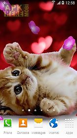 cute animals by  3d live wallpaper