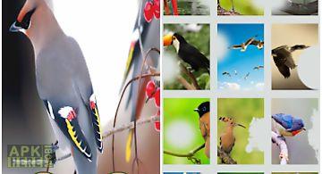 Colourful birds photo frame