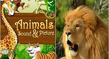 Animals sound and picture