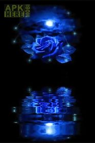 blue rose reflected in water l