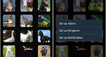 Animals sounds ringtones alarm