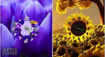 Flower clock free wallpaper