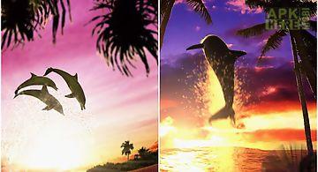 Dolphin sunrise trial