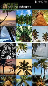 palm tree wallpapers