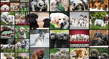 Dogs jigsaw puzzles games kids