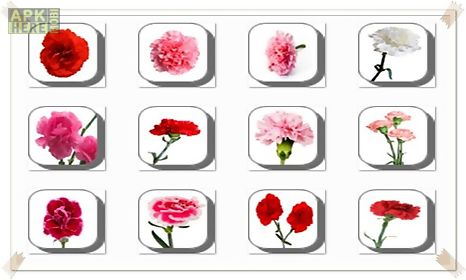 carnation flowers onet classic game