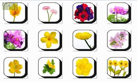 calendula flowers onet classic game