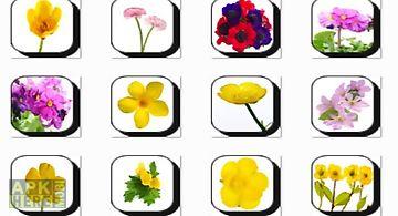Calendula flowers onet classic g..