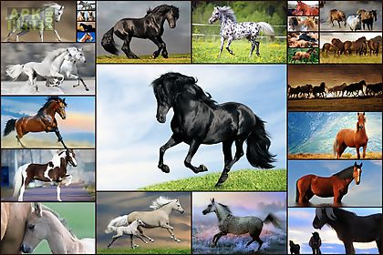 horse games - jigsaw puzzles