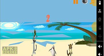 Penguin madagascar on beach