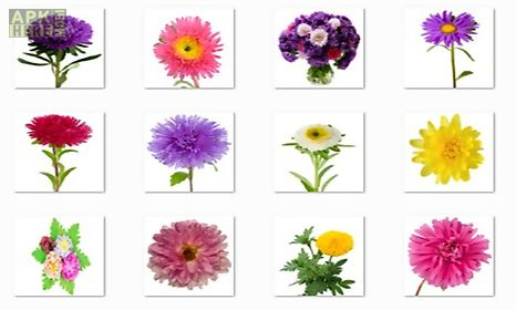 aster flowers onet classic game
