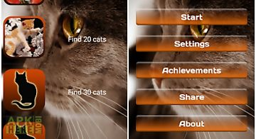 Find a cat 2. free!