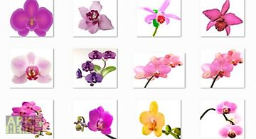 Orchid flowers onet classic game