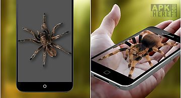 Funny spider on hand