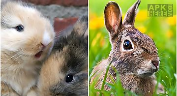 Cute bunnies  Live Wallpaper