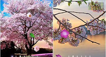 Sakura gardens Live Wallpaper