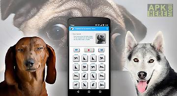 Human to dog sounds translator