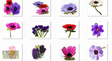 Anemone flowers onet classic gam..