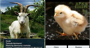Zoo : farm animals games