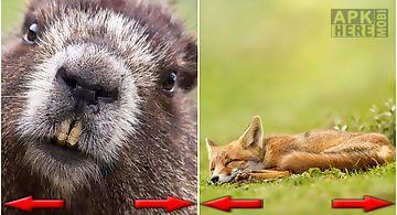 Funny animals photo