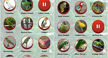 Parrot sounds