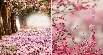 Cherry blossom by creative facto..
