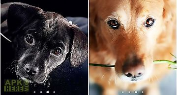 Cute dogs Live Wallpaper