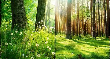 Forest by  hq Live Wallpaper