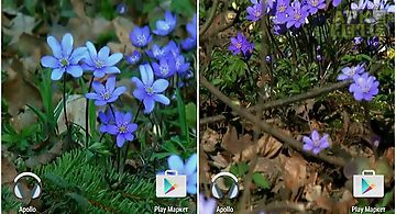 Forest flowers Live Wallpaper