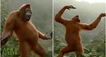 Wild dance crazy monkey lwp Live..